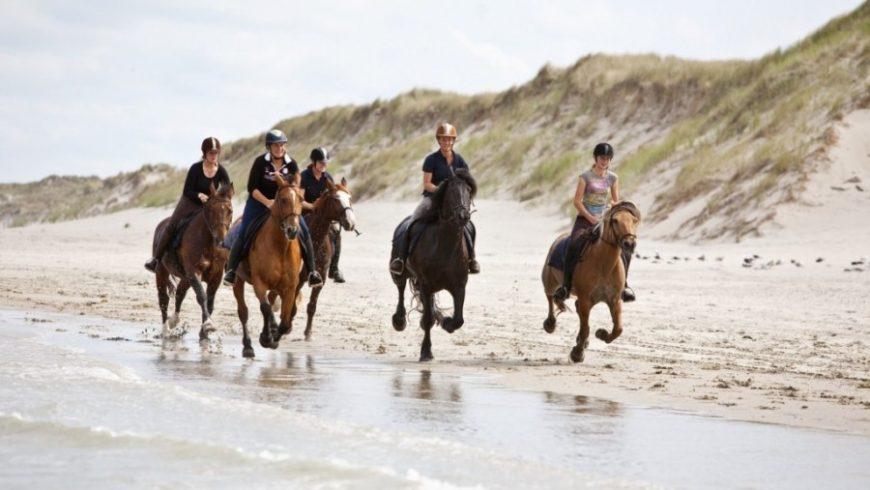 Randonnée à cheval en Normandie à la découverte des plages de Granville (2 jours/2 nuits)